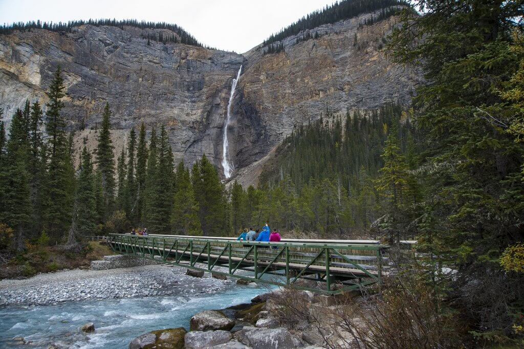 Discover Banff Grizzly Tour