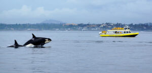 Vancouver Orka