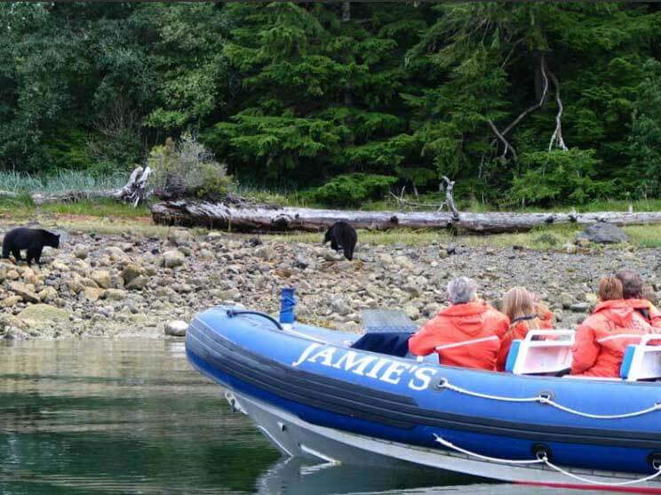 Ucluelet Bearwatching
